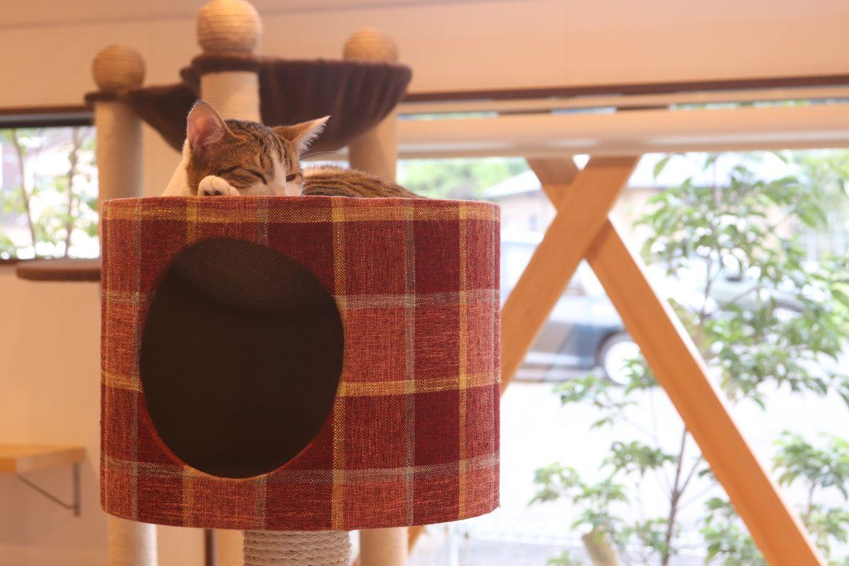 あなたの視線はもうネコのもの!保護ネコカフェは「ネコカフェ」の枠を超えた役割を担う癒やしの空間だった